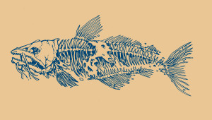 catfish3