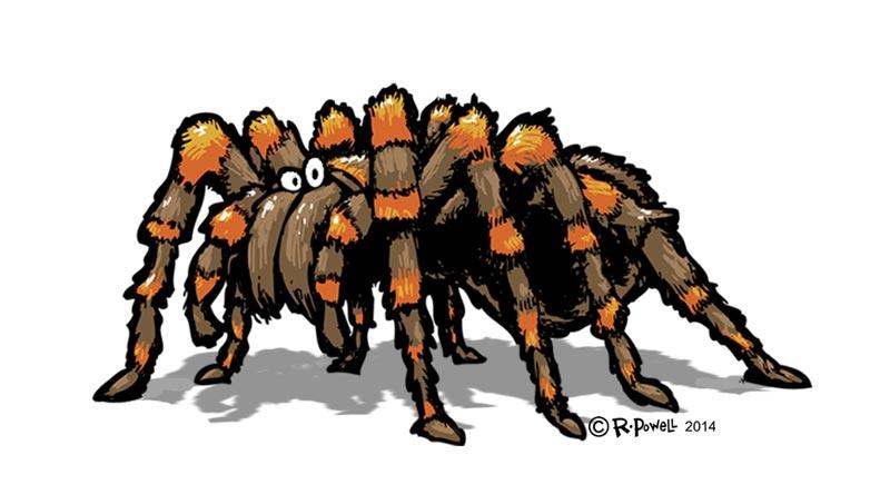 Tarantula Design Designs Tarantula